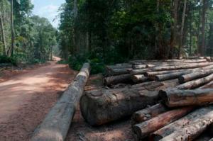 Andrew Snyder logging Guyana_web